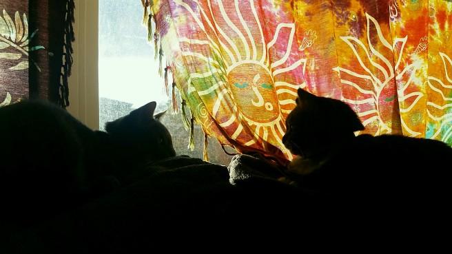 Aslan and Ganja window